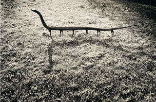 (Joan Fontcuberta, 'Fauna' (Solenoglypha Polipodida, 1985) / © Joan Fontcuberta)