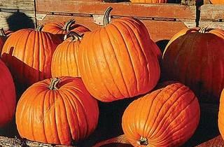Pumpkin Carving Party at Pub Royale