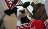 Chik-Fil-A comes to Chicago