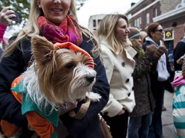 Chicago Canine Rescue Mutt Strut