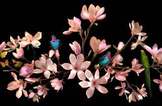 Allan Forsyth ('Magnolia Angelic', 2011)