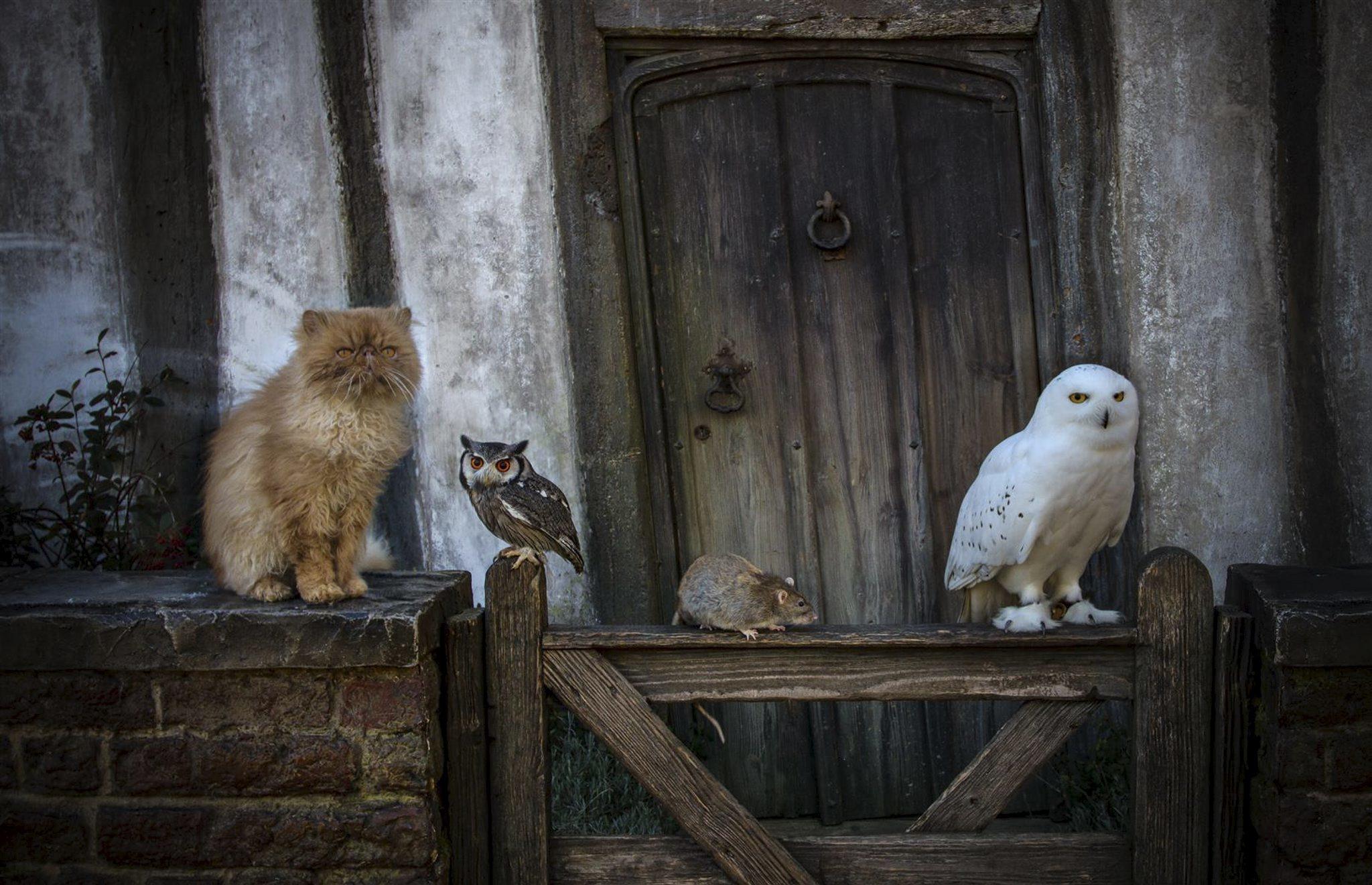 Animals Harry Potter Studio Tour