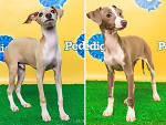 Taser, left, and Sharpie will compete in Animal Planet's Puppy Bowl X.