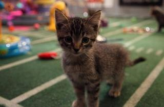 013.ae.PuppyBowlVIII9.jpg (Photo: Courtesy of Animal Planet)