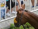 Arlington Race Track, Sunday, August 12, 2012