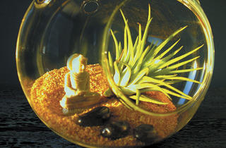 (Photograph: Couretsy of Meaningful Terrariums)