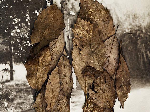 Anni Leppala ('Leaves II (The Couple)', 2013)