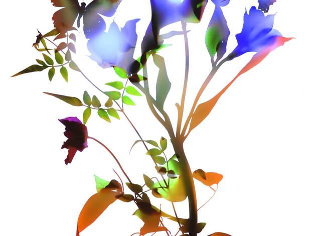 Allan Forsyth ('Gentle Spirit 005', 2014,)