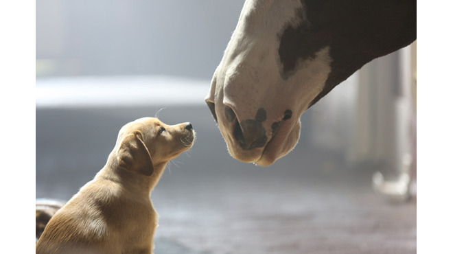 "Budweiser's ""Puppy Love"" ad"