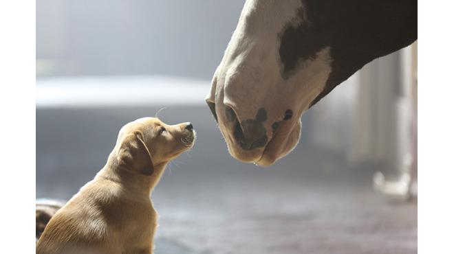 """Budweiser's """"Puppy Love"""" ad"""