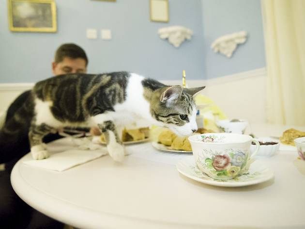 Lady Dinah's Cat Emporium | Restaurants in Shoreditch, London