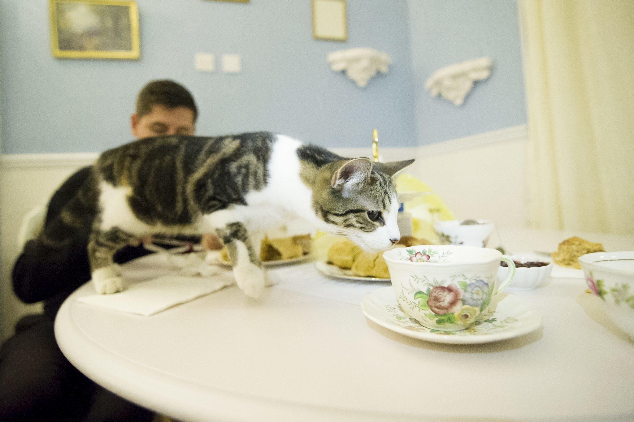 London Cat Cafe Video