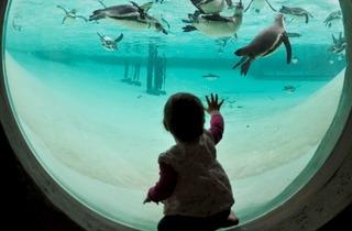 Penguin Beach (©ZSL London Zoo)