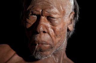 Homo Sapien model (©Kevin Webb/NHM Image Resources)