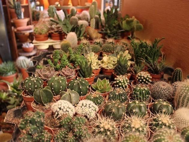Les succulents cactus (© Céline Astorg)