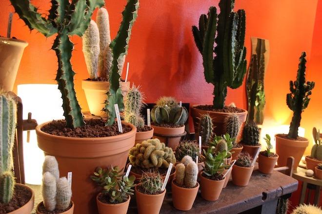 Un (joli)  cactus • Les succulents cactus