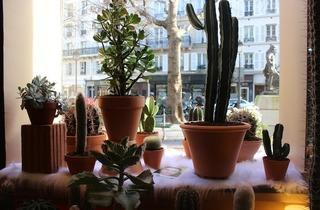 les succulents cactus shopping le marais paris. Black Bedroom Furniture Sets. Home Design Ideas
