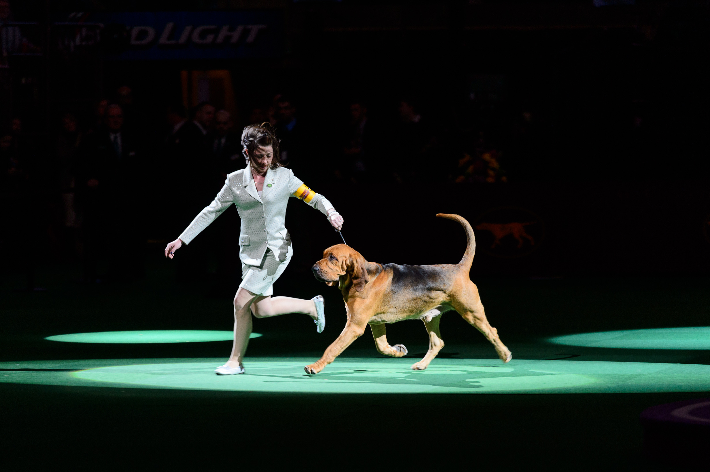 Photos: Check out the top dogs at the 138th Westminster Kennel Club Dog Show