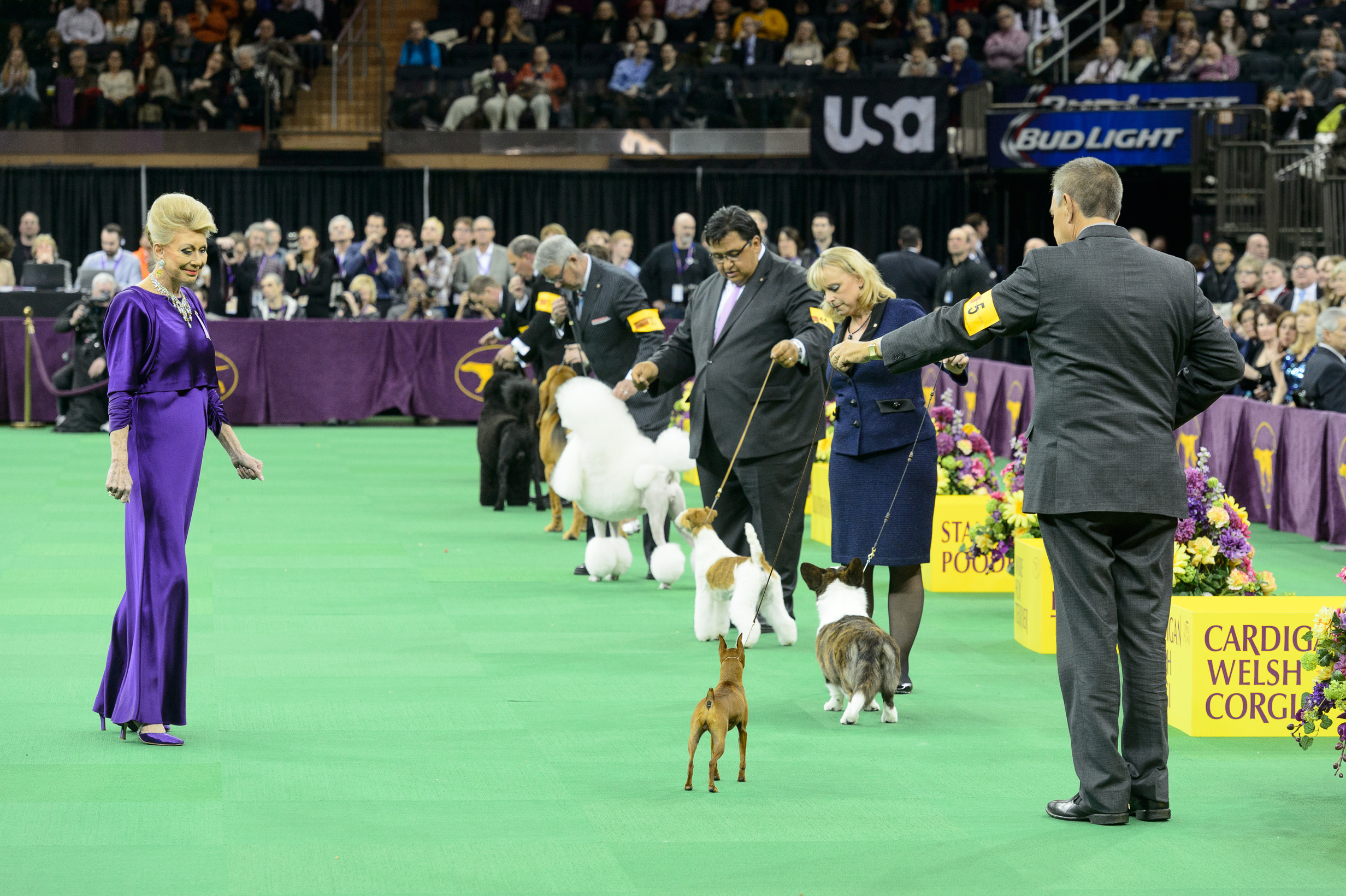 138th Annual Westminster Kennel Club Dog Show