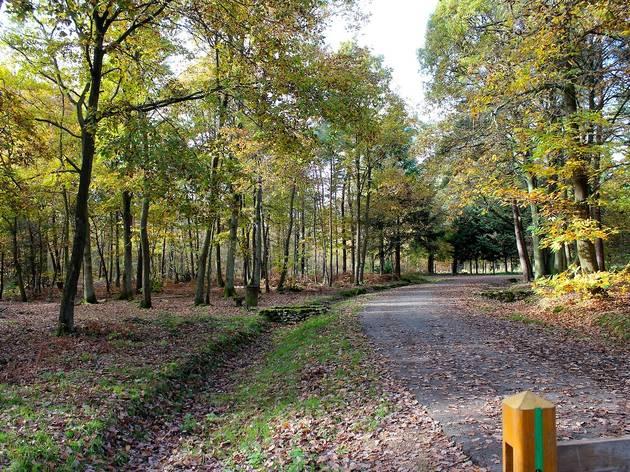 La forêt de Sénart (© Céline Astorg)