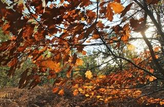 forêt de Sénart (© Céline Astorg)