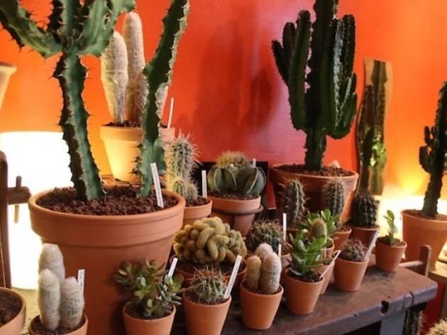 Pour les amateurs de piquant • Les succulents cactus