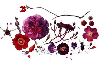 Botanical Art in the 21st Century