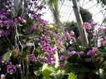 The Orchid Show: Key West Contemporary