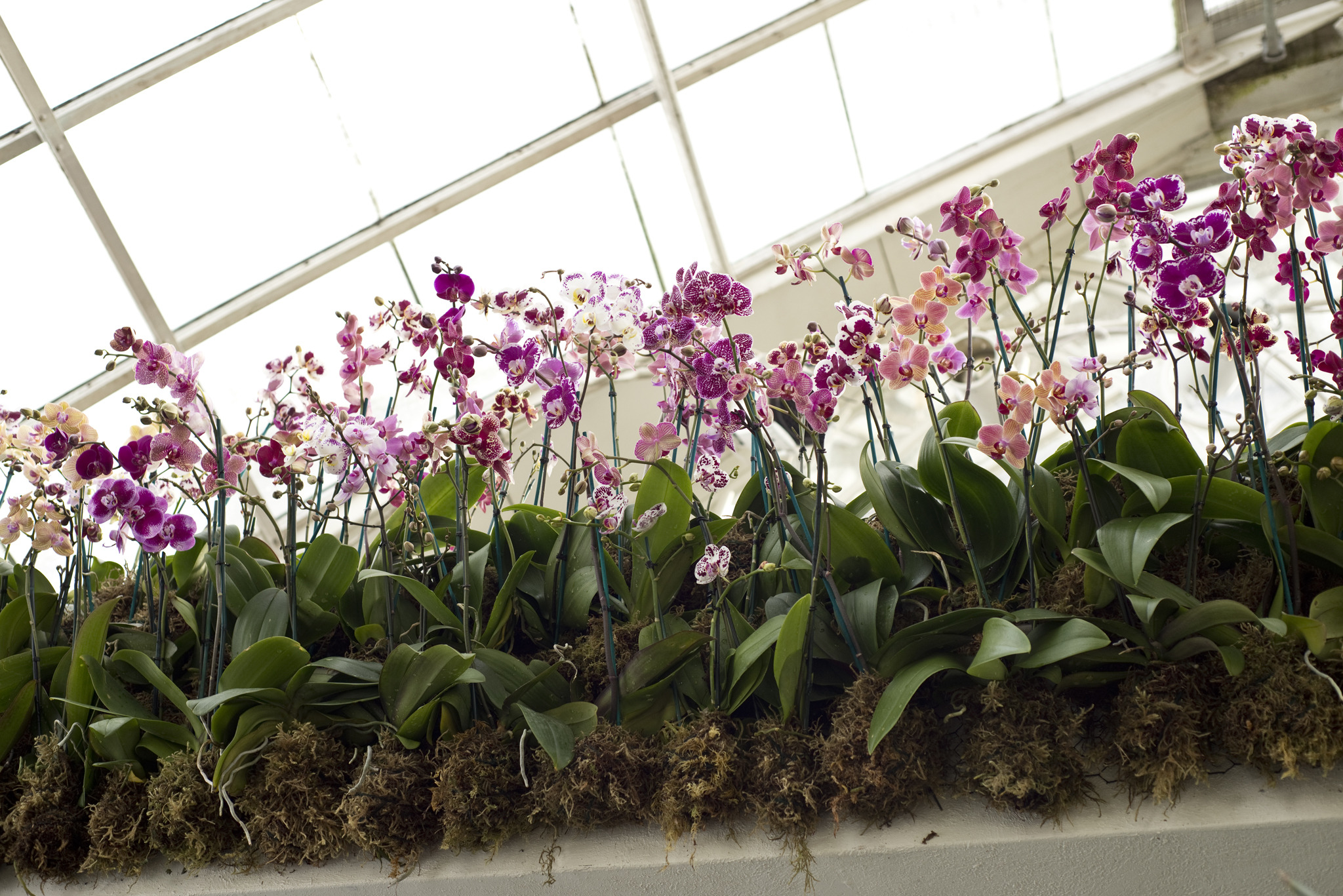 Orchid Show In Nyc Guide Including Where To Get Tickets