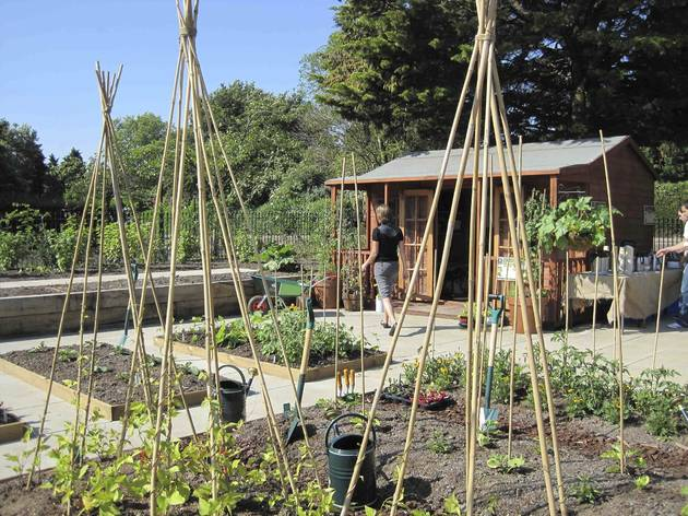 Open Garden Squares Weekend: Regent's Park Allotment Garden