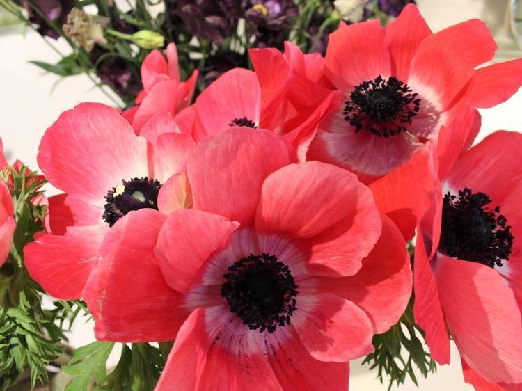 Dénicher les fleurs du mal