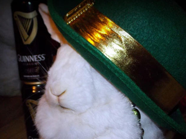 St. Patrick's Day Open House at the Bunny Museum