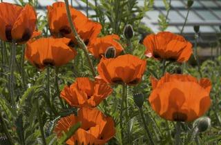 (© RBG Kew/ Andrew McRobb)