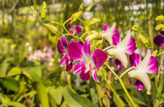 RF Orchids, Wildlife and attractions, Miami