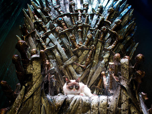 Grumpy Cat on the Iron Throne