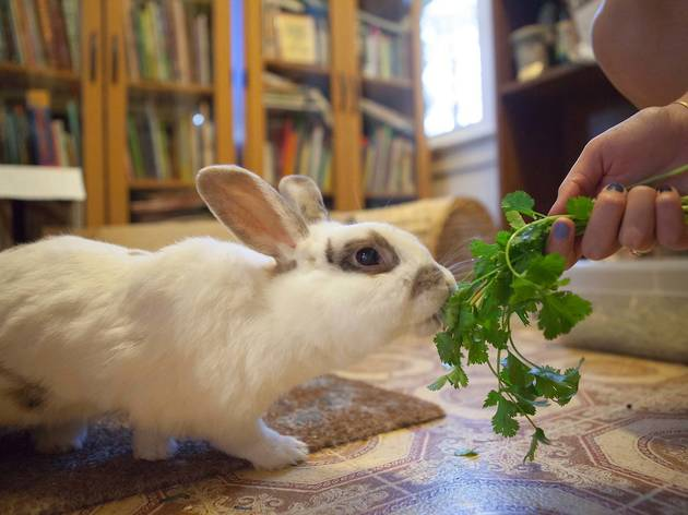 Easter Open House at the Bunny Museum