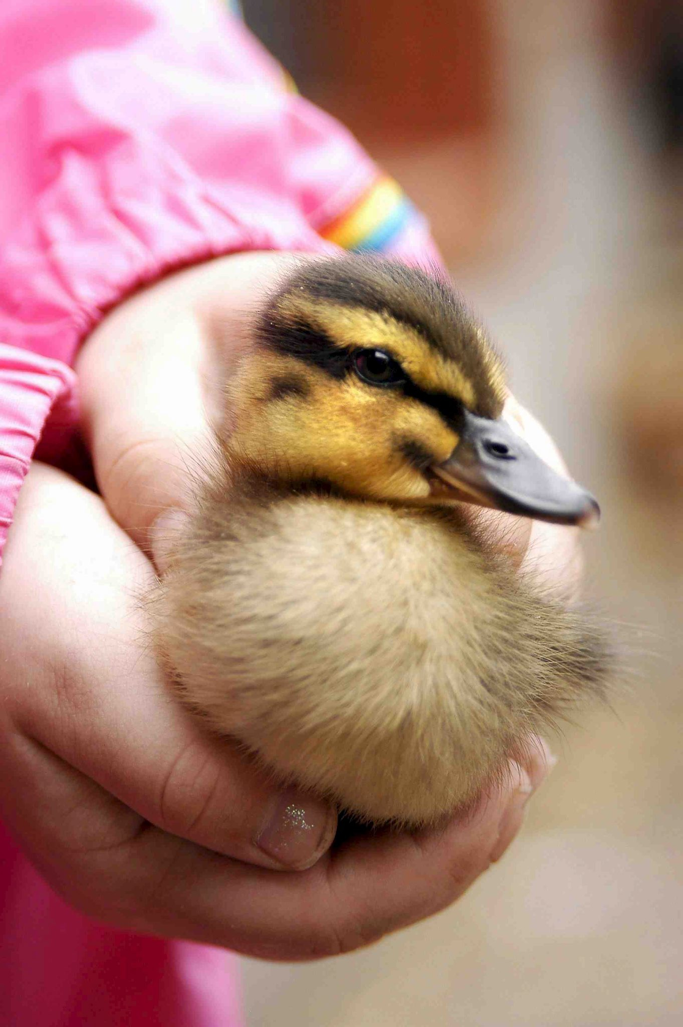 Giant Easter Duck Hunt