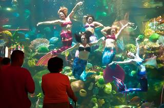 Mermaid Bar & Lounge