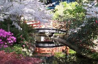 Japanese garden at Descanso Gardens.