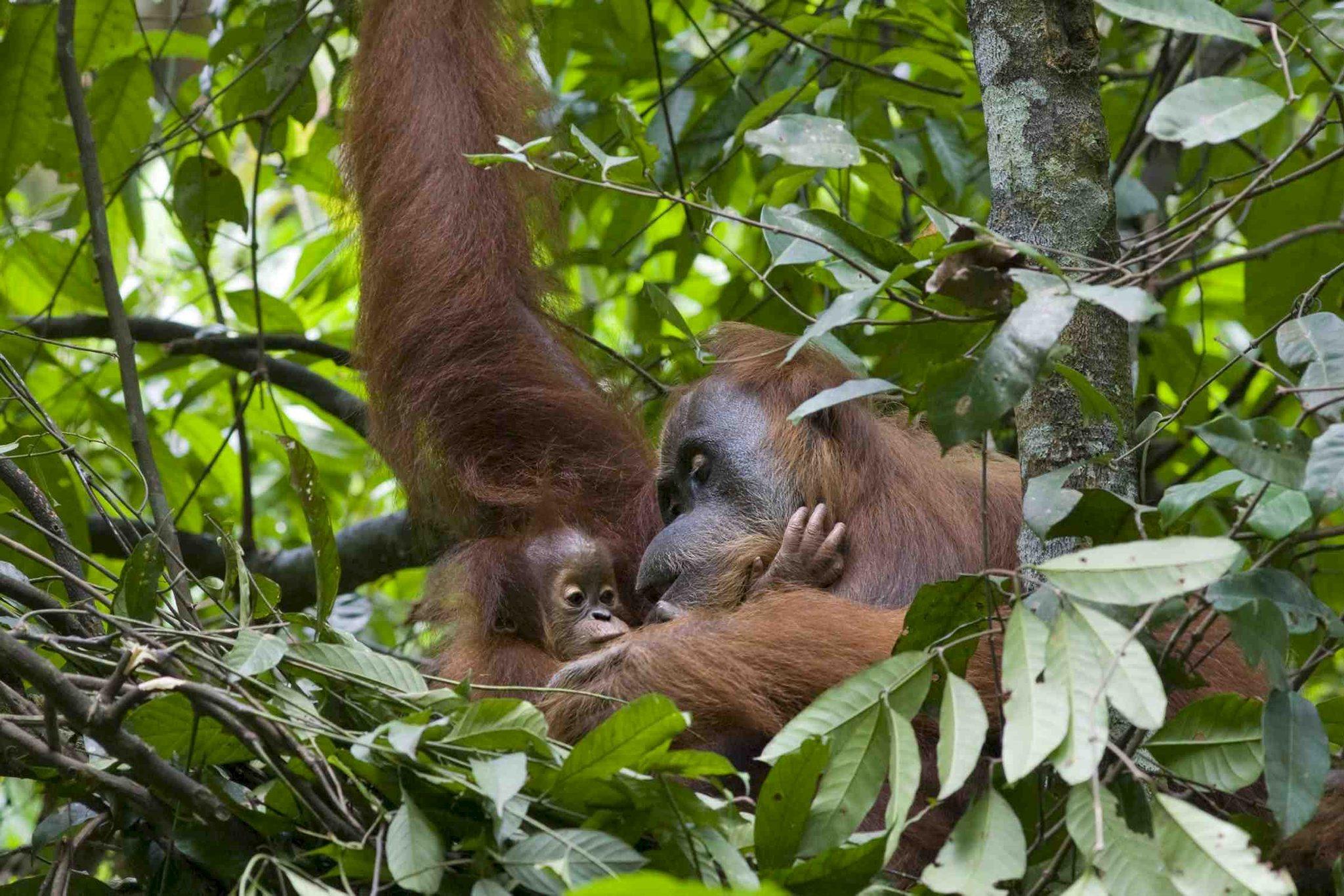 Spotlight Sumatra