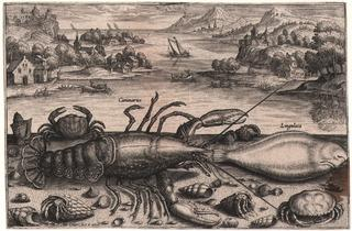 Adriaen Collaert, c.1560-1618 (' Lobster, sole, crabs and hermit crabs against a coastal background', 1598)