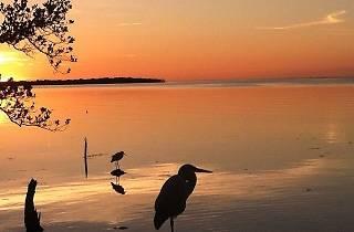 Florida Keys Wild Bird Center, Outdoor attractions, The Florida Keys, Miami