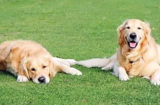 Adopt A Pet: Save A Life