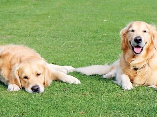 SPCA World Animal Day 2012