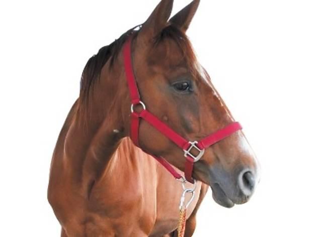 Royal Selangor Pony Club