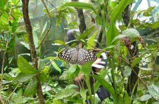 KL Butterfly Park