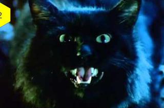The Cat (1992)