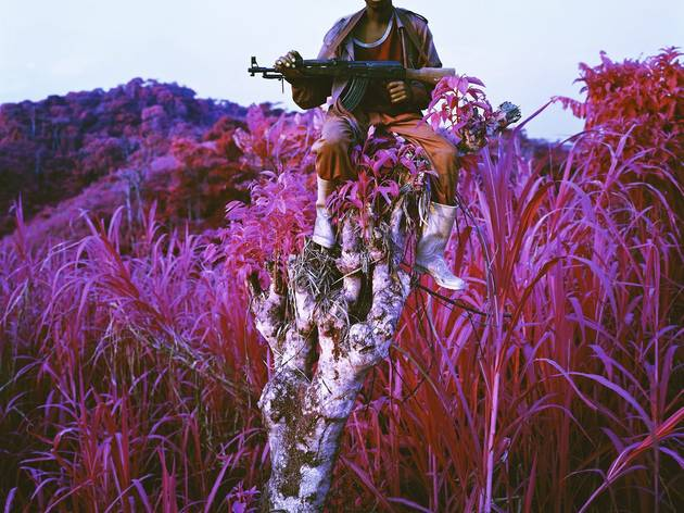 Richard Mosse ('Higher Ground', 2012)