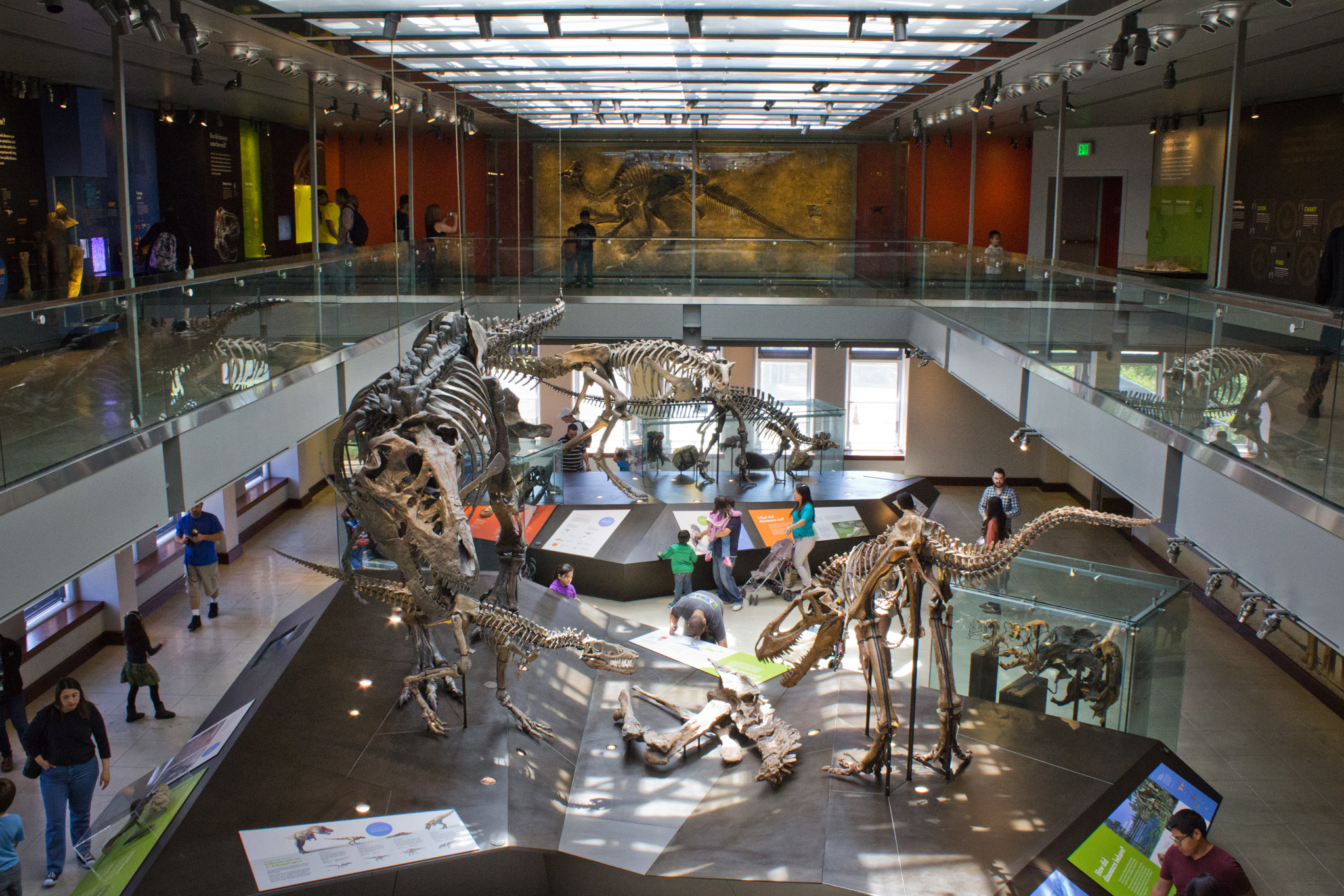 Natural History Museum of Los Angeles County (NHMLA): Located in Exposition Park, NHMLA has amassed one of the world's most extensive and valuable collections of natural and cultural history — more than 35 million objects, some as old as billion years.