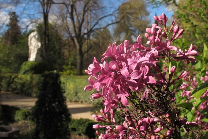 Discovering plant life: Real Jardín Botánico
